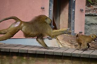 Vereinsausflug Tierpark Nürnberg 2019